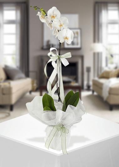 Her Zaman Tek-63 Gaziantep Çiçek Sepeti Siparişi