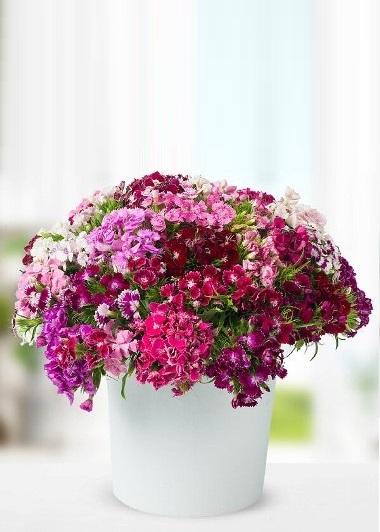 Hoşgeldin Baharım Gaziantep Çiçek Sepeti Siparişi