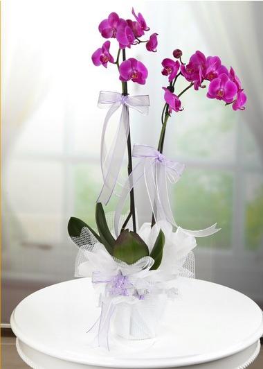 İkili Mor Orkide Gaziantep Çiçekciler