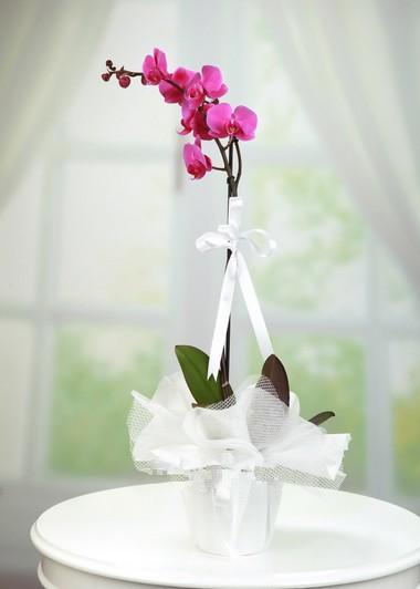 Tekli Mor Orkide  Gaziantep Çiçekciler